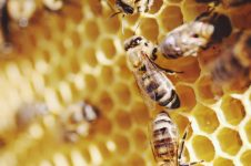 Belajar dari Lebah dan Kesesuaian Alquran dengan Madu pada Surat An Nahl